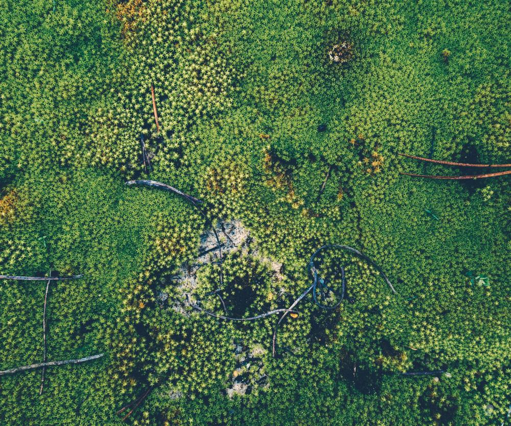 cogumelos-1.jpg