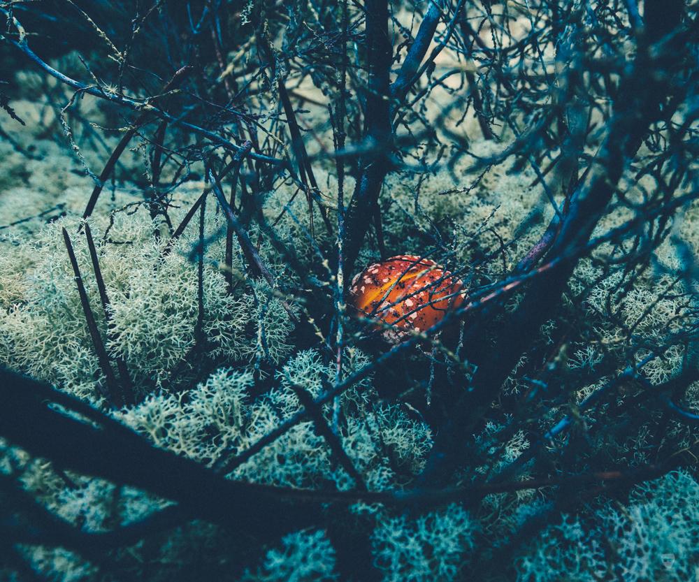 cogumelos-10.jpg