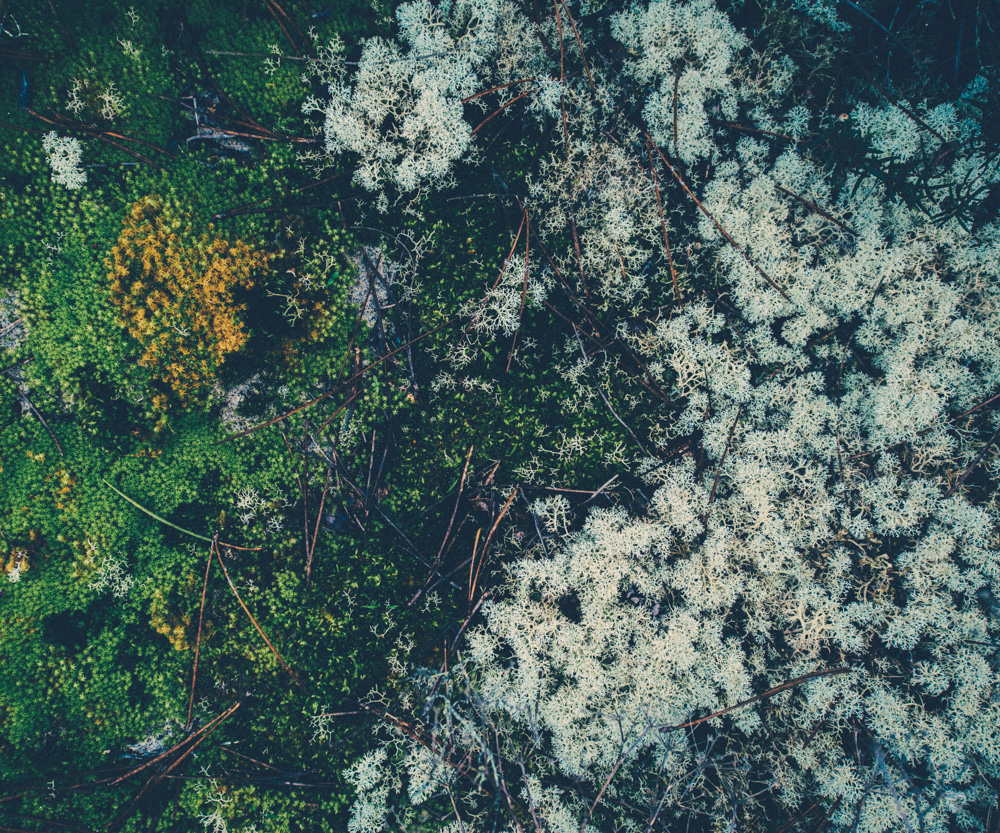 cogumelos-11.jpg