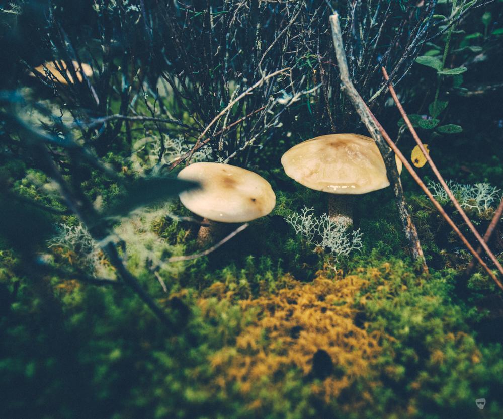 cogumelos-14.jpg