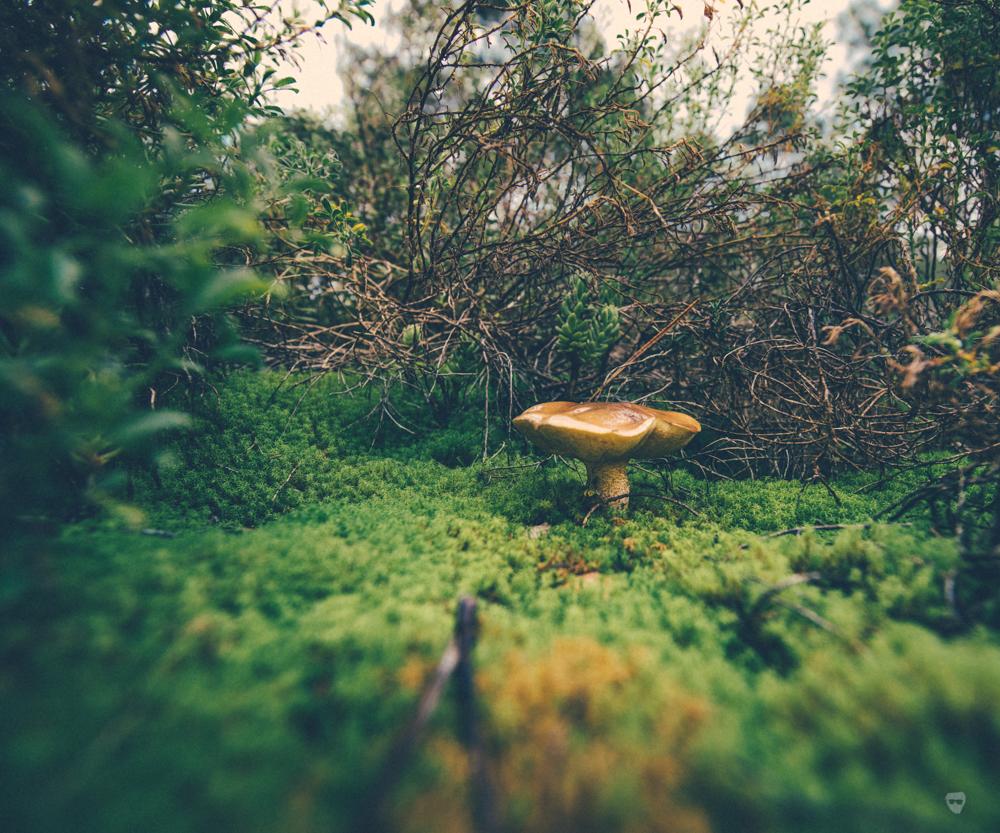 cogumelos-17.jpg