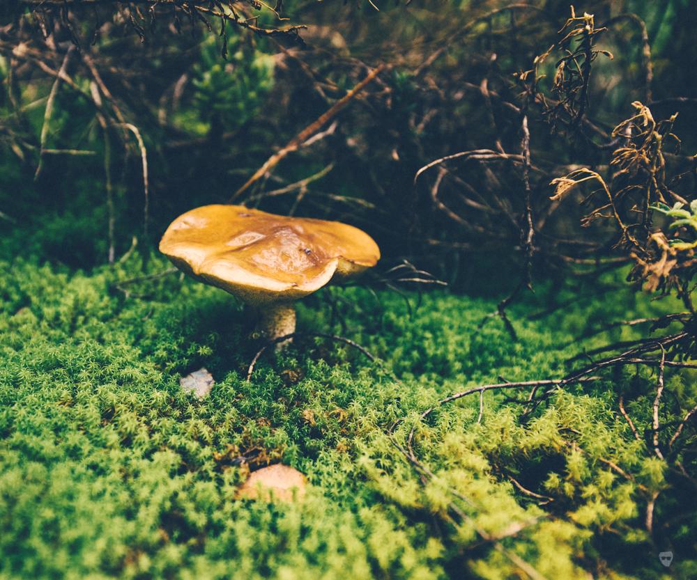 cogumelos-18.jpg