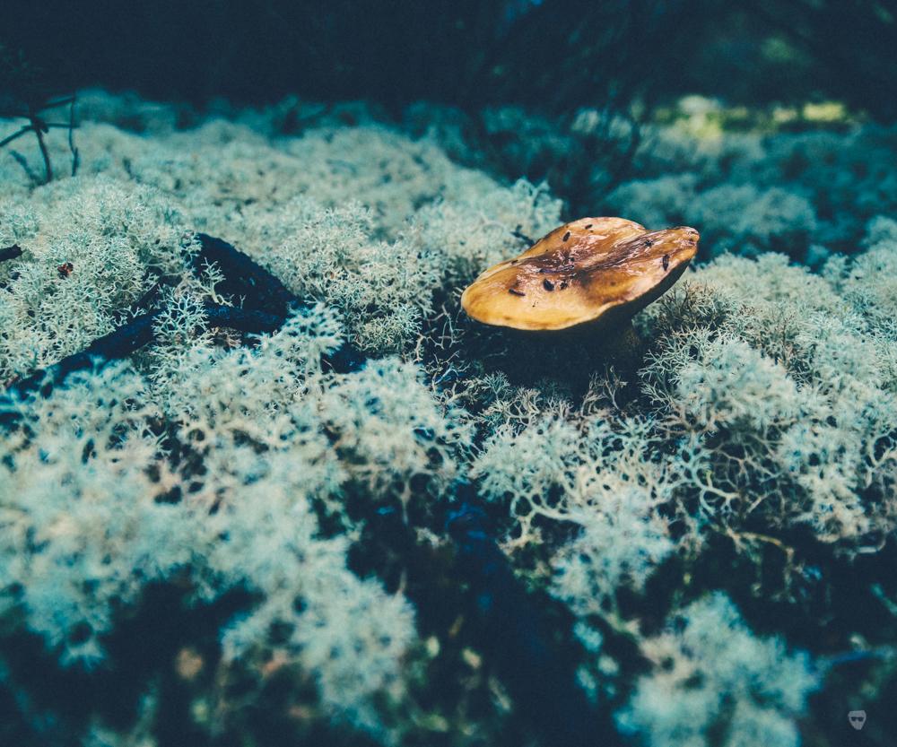 cogumelos-6.jpg