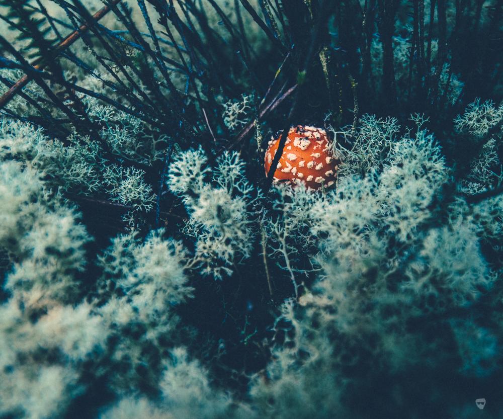 cogumelos-8.jpg