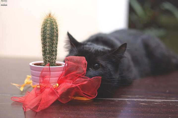 Cactus-718x479.jpg
