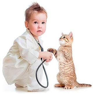 veterinario_de_gatosd.jpg