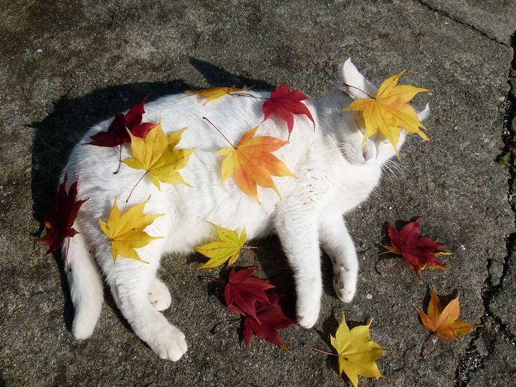 gatodeoutono.jpg