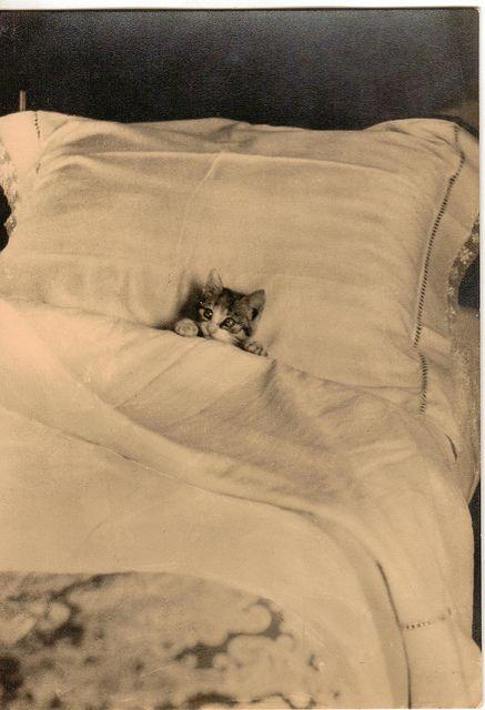 bedcat.jpg