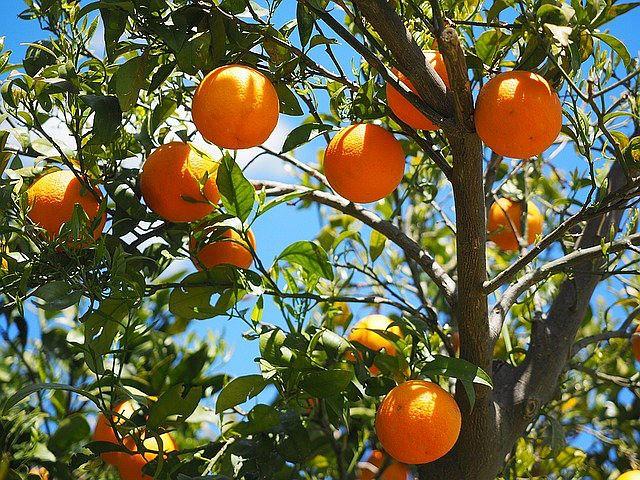 laranjal.jpg