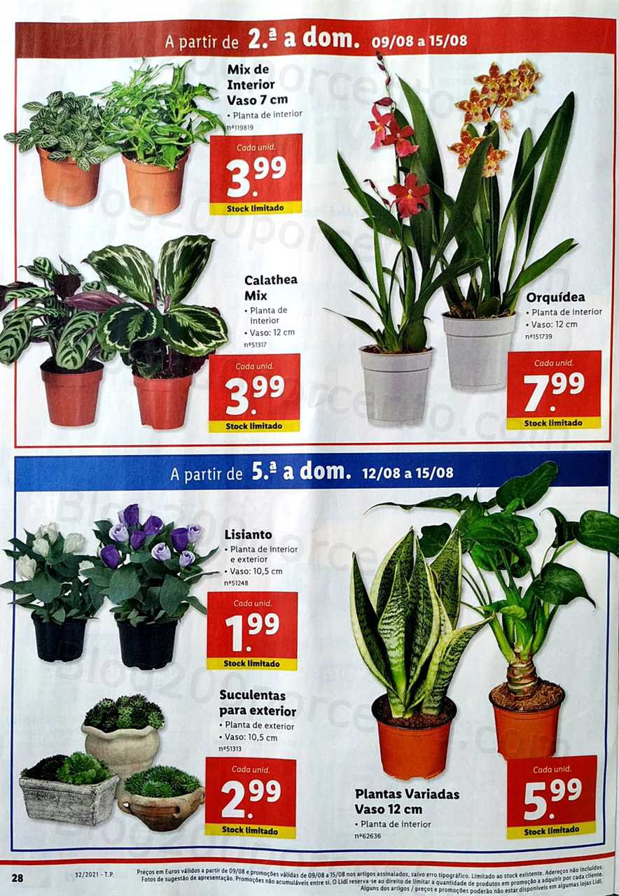 Lidl 9 a 15 agosto