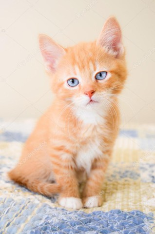 depositphotos_54408029-stock-photo-cute-orange-kitten-sitting-on.jpg