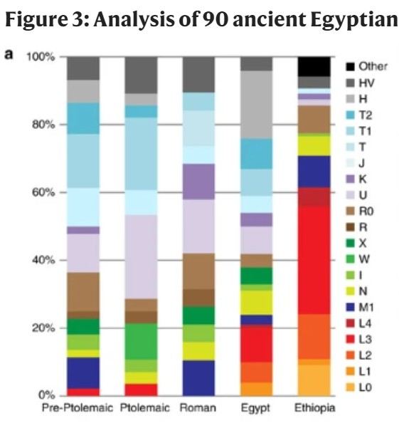 Capture mtdna egypt.PNG